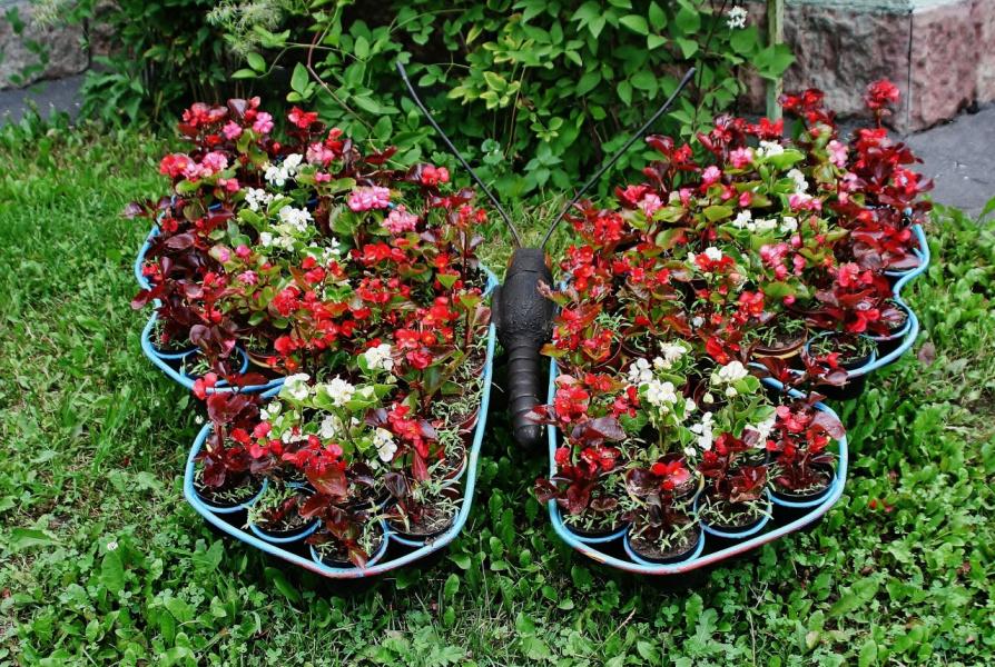 клумба - Бабочка Цветик-семицветик