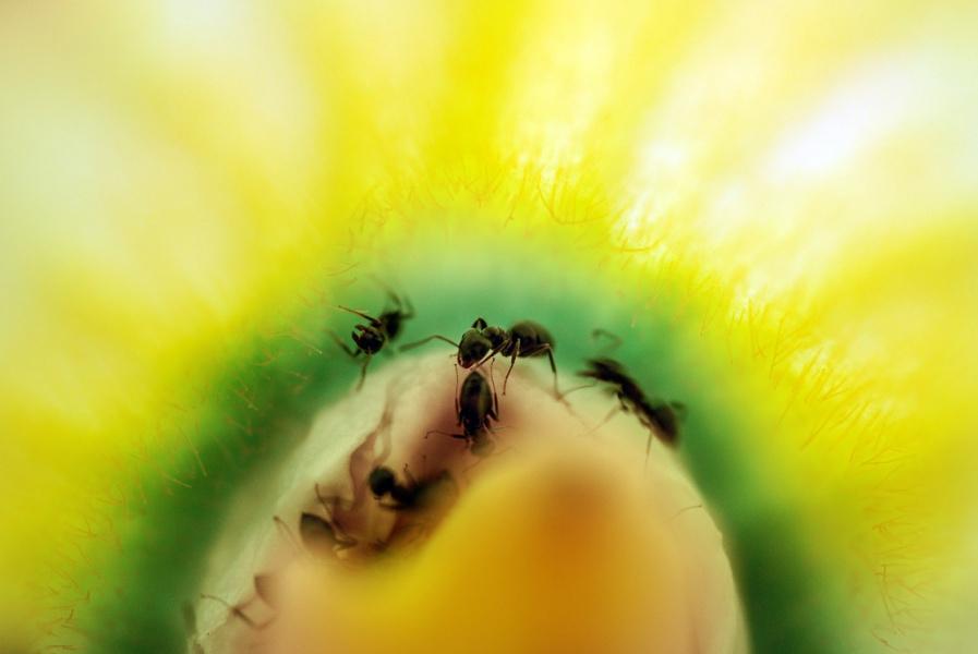 Заглянувши внутрь цветка