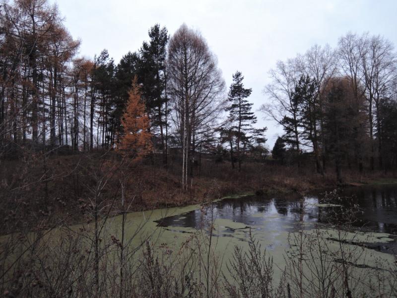 Осенние сумерки