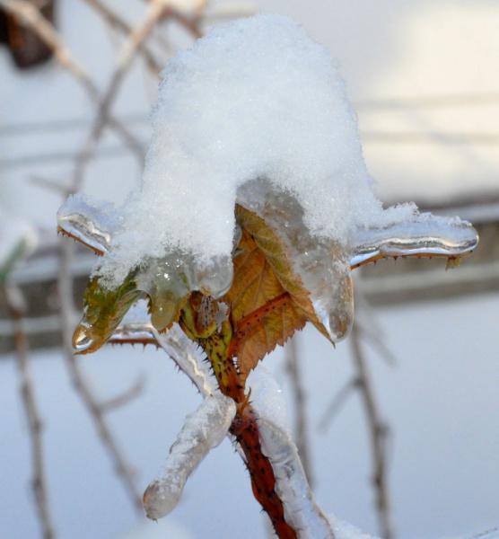 Ледяная шапка