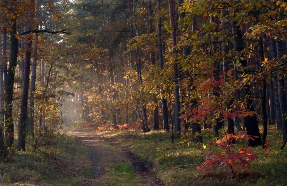 """В багрец и золото одетые леса..."""