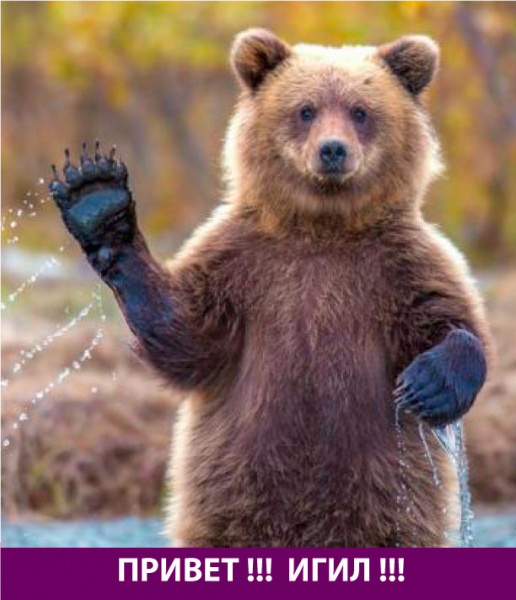 Медведь здоровается