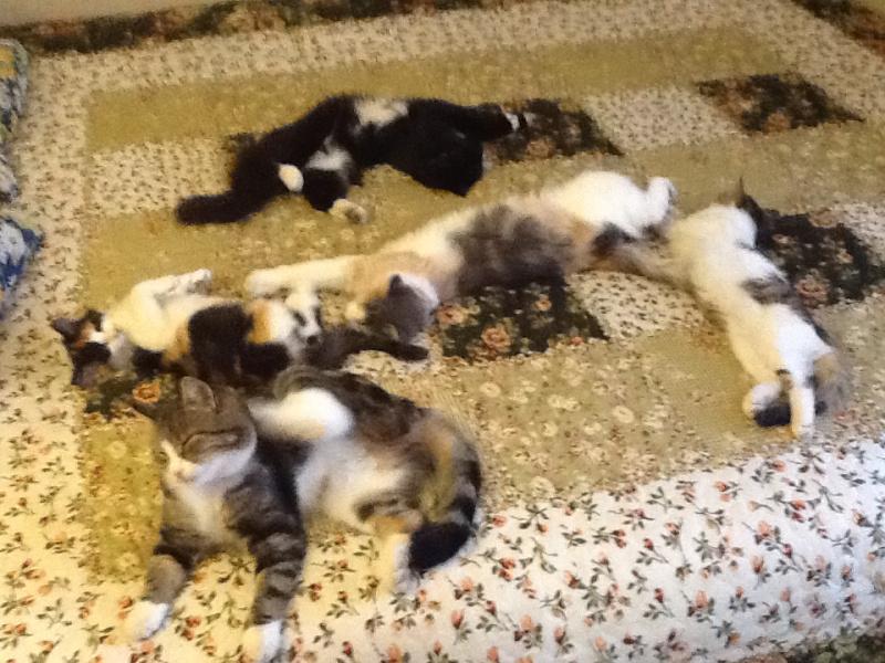 Наши любимые кошки! Все подобрашки.