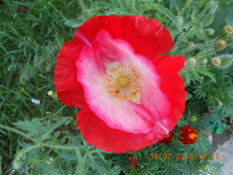 Цветы 024