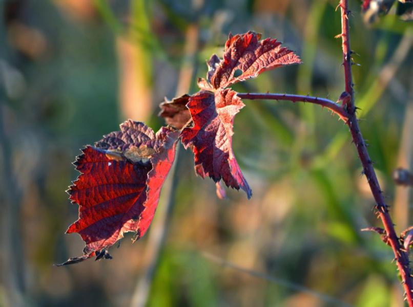 Осенний лист багрянный