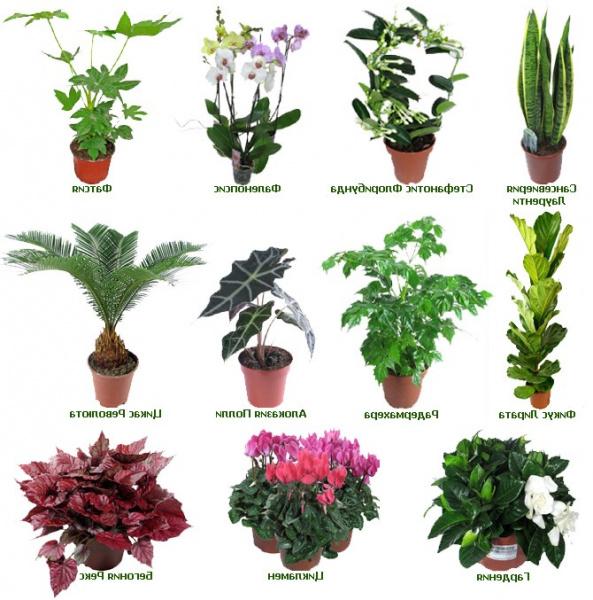 самые неприхотливые комнатные растения названия температуры