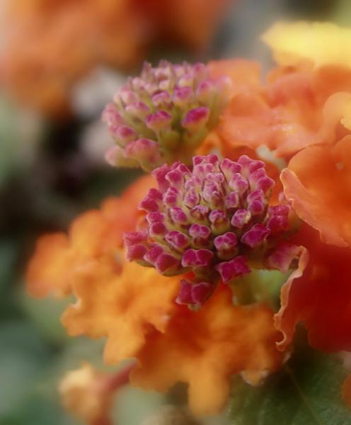 Какой-то цветочек)