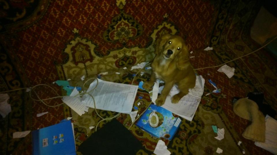 DSC_0356 Учёный пёс Барни