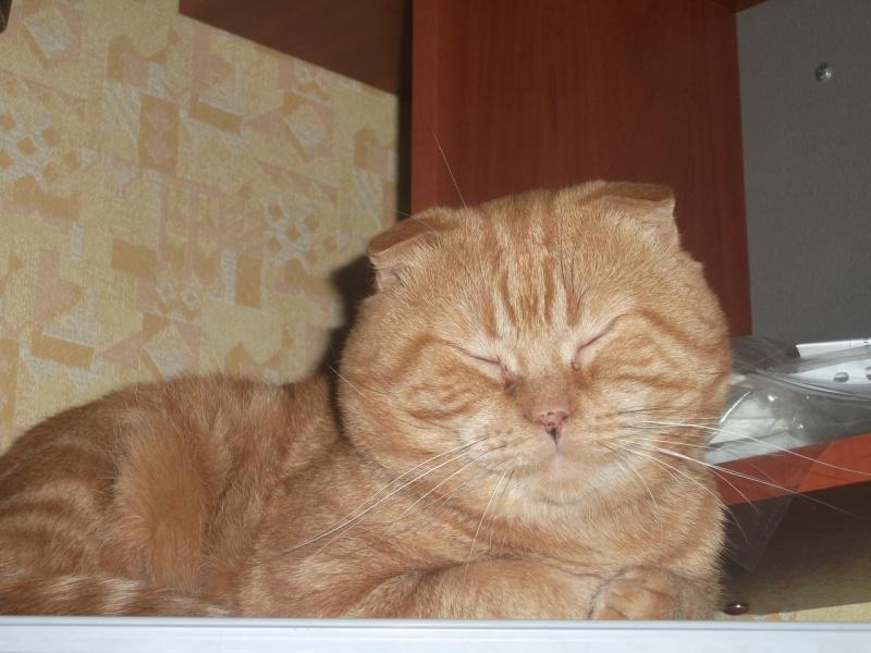 Кот внука.