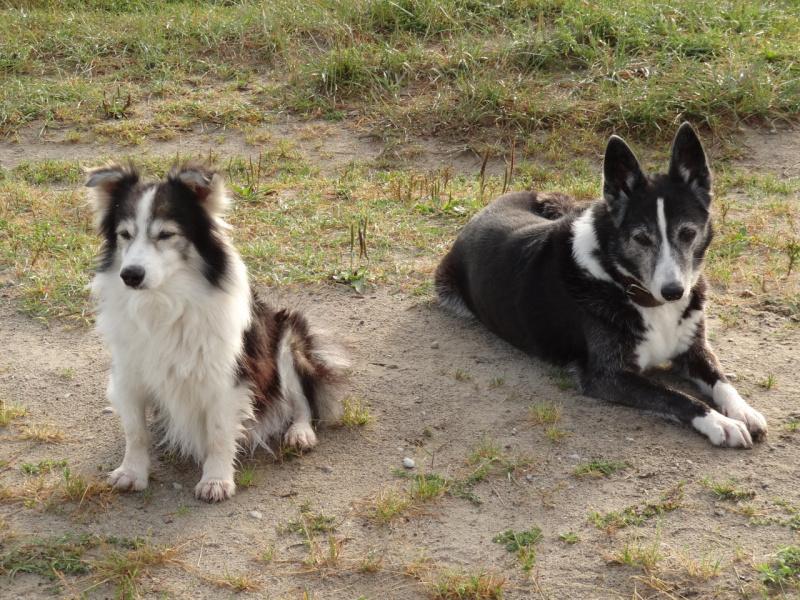 Рекс и Дина
