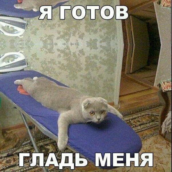 photo_1508338753