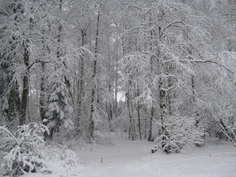 Кружевница-зима