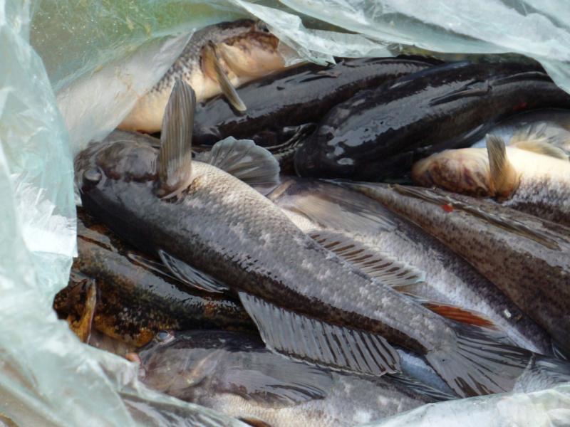бухтарминское рукотворное озеро запреты держи рыбную ловлю