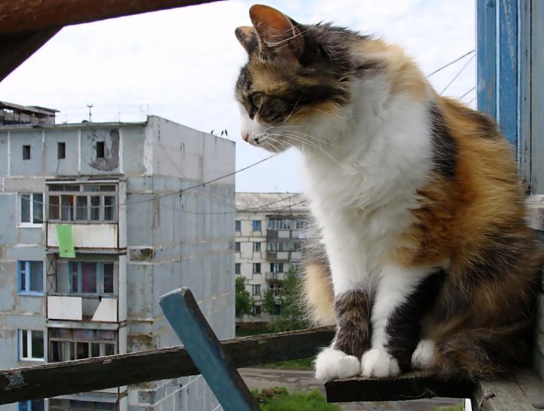Моя кошка Чита гуляет на балконе уши, лапы, хвост.