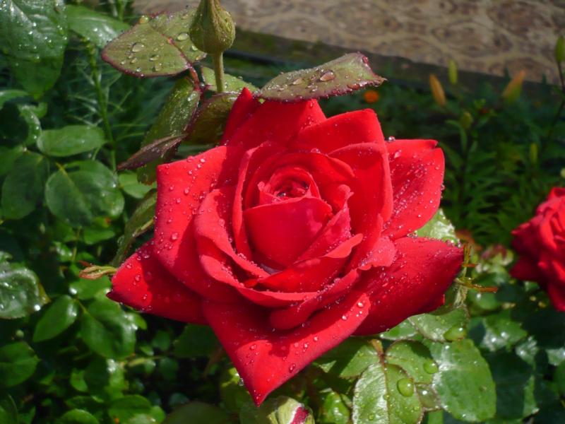 мой цветок