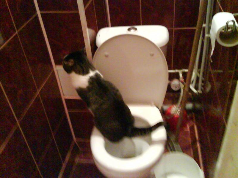 Не могу ходить в туалет по большому почему