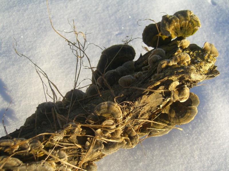 вот и зимой грибочки бывают.
