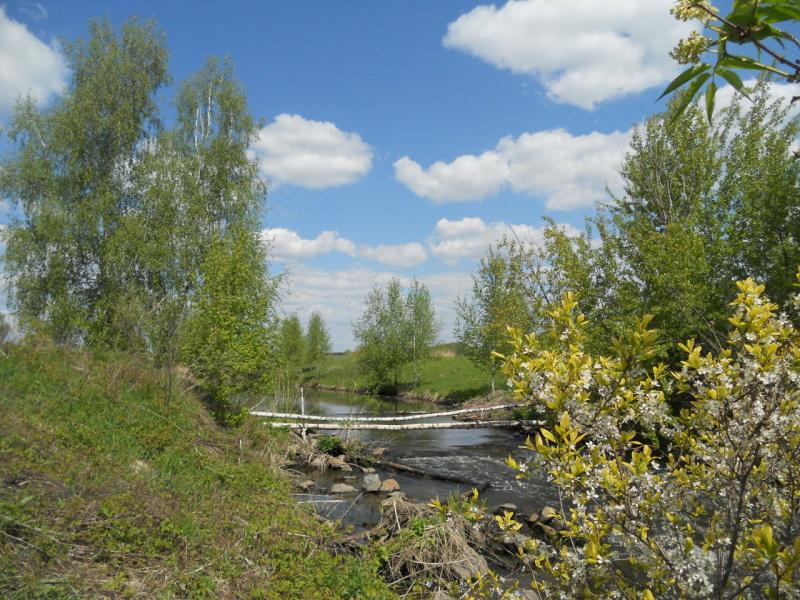 Берёзовый мостик