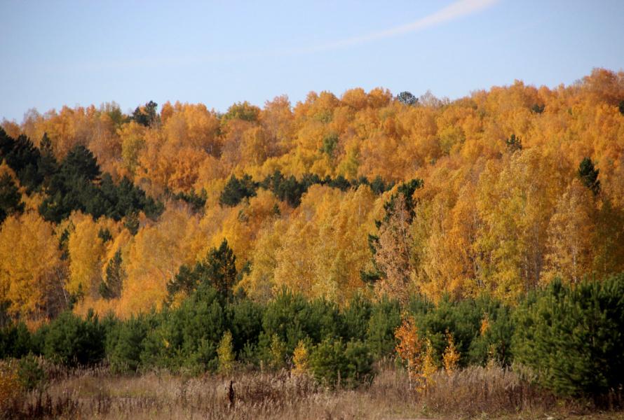 Осенний пожар полыхает в лесу