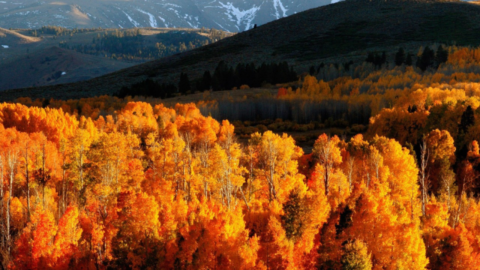 autumn_trees_gold_mountains_light_hills_slopes_october_62322_1920x1080