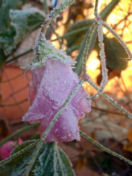В морозных объятиях