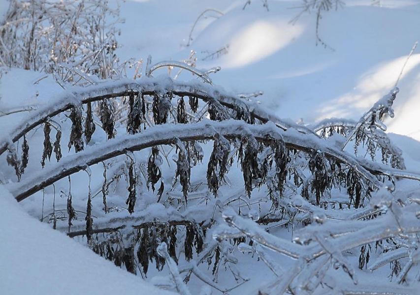 """""""...Ковала ледяные да над реками мосты."""""""