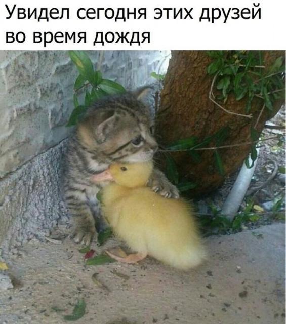 photo_1507520079