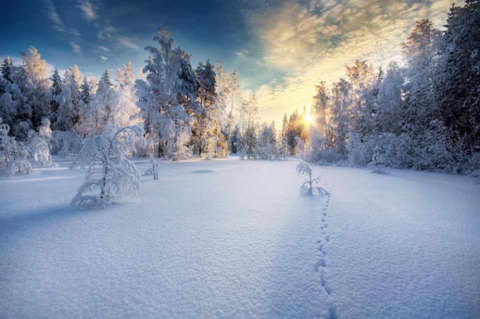По первому снегу....