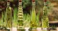 Эфирное масло розмарина .Целебные свойства и применение розмаринового масла.
