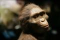 Ученые установили причину гибели найденного в Африке предка человека