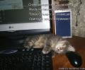 Котенок-программист