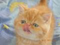 Красный мраморный котик  продан в Николаевскую область