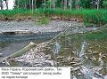 1736. На Сахалине рыбные чиновники решили отдать под промышленные РПУ еще десять нерестовых лососевых рек.