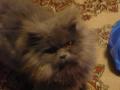 Мой любимый котик Соус!!!!