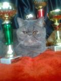 Моя родоначальница питомника Патриция
