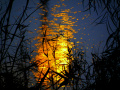 Ночное озеро сквозь заросли камыша