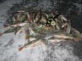 1516. Новогодняя рыбалка.