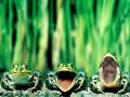 Этот забавный животный мир