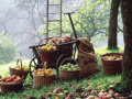 Сентябрьское яблоко: 20 рецептов, которые помогут справиться с щедрым урожаем