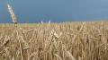 Производители зерновых молятся о дожде