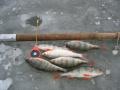 1589. Отчеты о рыбалке 14 января - 20 января