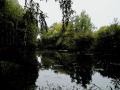 Пруд за МРЭО в С.Бутово