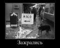 Демотиваторы № 81(10 фото)