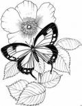 Трафареты. Бабочки и гусенички (много)!!!