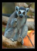 Шерлок Холмс местного зоопарка!!!