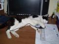 это наш трусливый кот Пуська.