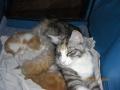 Третий Юлин помёт, три котёнка.