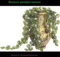Зелень декоративная