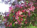 Весна вдохновила!!!!!! 5.05.2009