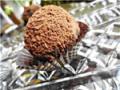 № 16 Конфеты из чернослива с вишней и какао